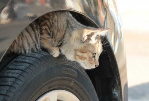 猫バンバンプロジェクト